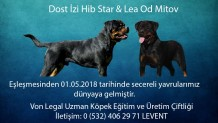 Dost İzi Hib Star & Lea Od Mitov Yavruları