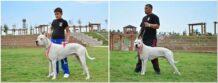 Ayvaz & Şiva Dogo Arjantin Yavruları